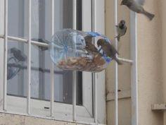 Reciclar una botella para hacer un comedero de pájaros!