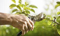 La poda de los árboles podemos clasificarla en cuatro tipos: la poda de formación, de reducción, de fructificación y de limpieza.