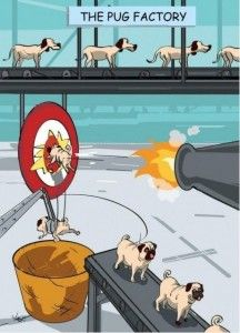 The Pug Factory. This is not exactly in good humor, but that is what pugs look like! The Pug, Pugs, Pug Puppies, Funny Dogs, Funny Animals, Funny Memes, It's Funny, Reddit Funny, Funny Stuff