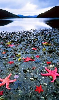 Starfish Colony - West Coast New Zealand