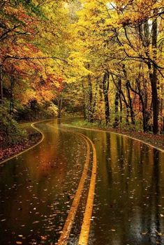 Autumn Rain. Favorite Season! My goodness! Can this scenery get anymore beautiful?