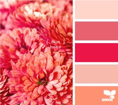 pinks and corals to go with whichever green