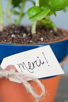 DIY potted herb favors from the sweetest occasion