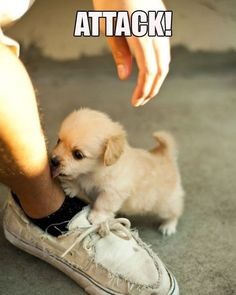 Cuteness attack! Reminds me of my Macy when she was a puppy. She stll loves giving kisses