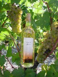 Trente-six Malices Weinproduzent: Cave de Goubing