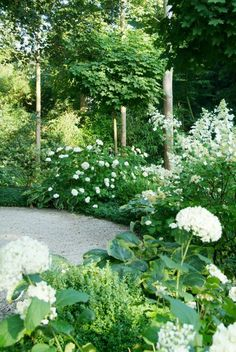 ~White garden