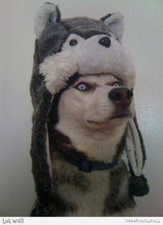 Lol! The dog looks like Steele from Balto. :)