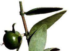 El aceite de jojoba es ideal para las pieles grasas