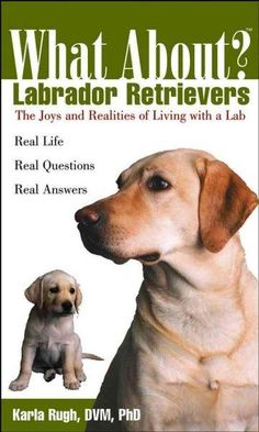 Are Labrador Retrievers generally healthy dogs? How much does it cost to keep a Lab? Can I keep my Lab inside, or do I need a yard? That little Labrador Retriever puppy is so adorable-but is he the ri