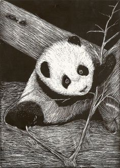animals in scratch board | Panda Scratchboard by =shirou45 on deviantART