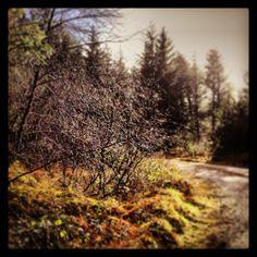 Glistening bush - John Dalton - gently does it . John Dalton, Photographs, Country Roads, Photos