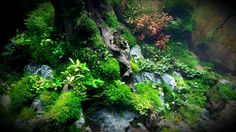Beautiful aquascape