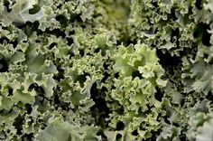 Kale Calories and Nutrition