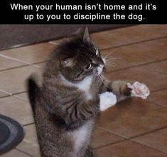 5 Funny Pictures Of Today - #funnymemes #funnypictures #funnyanimals #funny #lol #haha #memes #funnytexts #funnyquotes