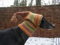 Ready for winter!  Crafting4greyhounds