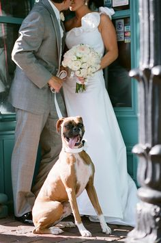Stacie Richter's wedding picture / Boxer And Baby, Boxer Love, Dog Love, Pizza Wedding, Dog Wedding, April Wedding, Wedding Dreams, Fall Wedding, Wedding Stuff
