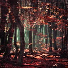 autumn, fall, forest, landscape, mystical, nature