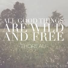 All good things are wild & free. Thoreau (Post about living life fully and taking it less seriously. Lyric Quotes, Words Quotes, Wise Words, Sayings, Lyrics, Pretty Words, Beautiful Words, Its All Good, Happy Heart