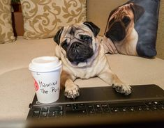 I was so busy today managing my website and social media accounts that I had to call and ask my humans to get me a cup of coffee on their way back home ☕ #mauricethepug #crowncoffee #coffee #crown #tirgumures #romania #bestintown #website #socialmedia #busy #busypug #ceo #coffeebrake #pugstory #pugchat #puglife #pug #mops #dog #puppy