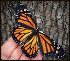 Monarch Butterfly - Commonly seen in the Tallahassee area.