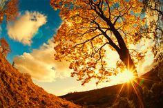 #sunset #nature