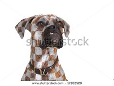 Unique Breed Stock Photos, Images, & Pictures | Shutterstock