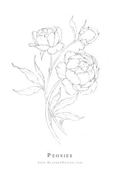 Delicate peony flower drawing by Katrina Crouch of Blushed Design. The full blooms dance whimsically together across the page as they reach and grow. Learn how to drawing beautiful flowers like this (for free!) in our 5 day drawing challenge Flower Line Drawings, Flower Sketches, Art Drawings, Peony Drawing, Floral Drawing, Drawing Drawing, Flower Design Drawing, Simple Flower Drawing, Botanical Line Drawing