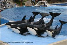 SeaWorld San Diego also we got to we lunch with them and got soked