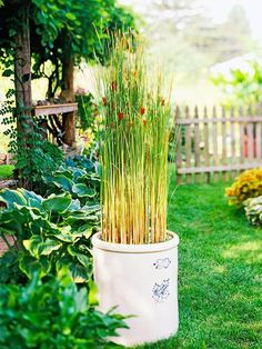 A crock filled with dwarf cattails and floating fairy moss stands tall against a backdrop of hostas: http://www.bhg.com/gardening/landscaping-projects/water-gardens/dream-water-gardens/?socsrc=bhgpin032014moveablemarsh&page=15