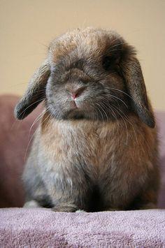 Flopsy Bunny :)