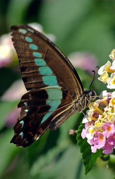 Beautiful butterfly photo, 30 the most beautiful butterflies