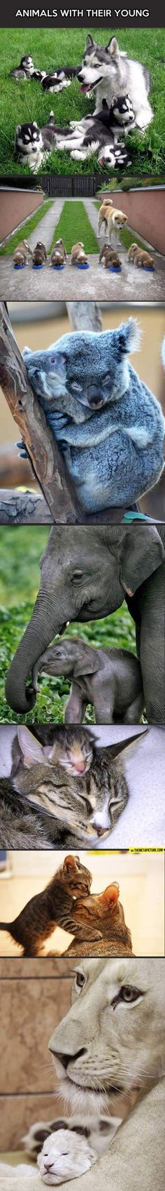 Animals with their babies Check more at http://hrenoten.com
