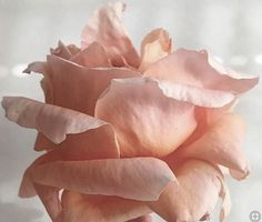 Shades Of Peach, 50 Shades, Peach Colors, Color Themes, Favorite Color, Salmon, Beautiful Pictures, Create, Flowers