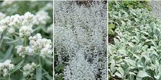 Garden Gadgets, Natures Sunshine, David Austin Roses, Mosaic Garden, Stone Mosaic, Flower Beds, Garden Paths, Garden Inspiration, Outdoor Gardens