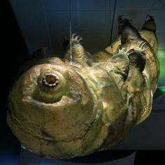 Želvuška v nadživotní velikosti. Kredit: Eden, Janine and Jim / Flickr.