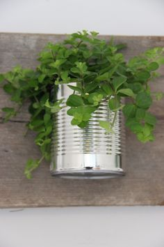Plant in tin can - Plant in conserven blik