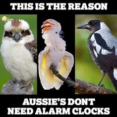 This is the reason Aussies don't need alarm clocks