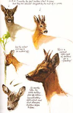 Stukadoorszoon, jager, reclamemaker, illustrator, vader, schilder, kortom tekenend verteller Rien Poortvliet heeft mijn beeld van een kabouter voor eeuwig bepaald, maar zijn illustraties van het bosdierenrijk staan even goed in mijn geheugen gegrift. Met dank aan Mister Crew, hij dook veel illustraties weer op uit dit boek. » Meer Rien Poortvliet