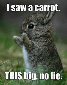 bunny cute not lying