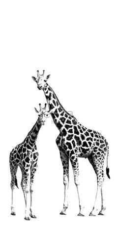 Behangposter Giraffe
