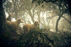Concurso de Fotografía del Mundo Rural Jose Luis Garcia Melendez Ovinos En La Niebla PN de Los Alcornocales (Cádiz)