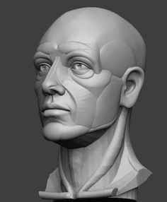 Exceptional Drawing The Human Figure Ideas. Staggering Drawing The Human Figure Ideas. Facial Anatomy, Head Anatomy, Anatomy Poses, Body Anatomy, Anatomy Drawing, Anatomy Art, Zbrush Anatomy, Planes Of The Face, Hight Light