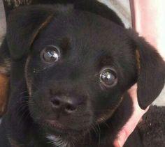 Hunde Foto: Jessica und Lucy - Liebe auf den ersten Blick  Hier Dein Bild hochladen: http://ichliebehunde.com/hund-des-tages  #hund #hunde #hundebild #hundebilder #dog #dogs #dogfun  #dogpic #dogpictures