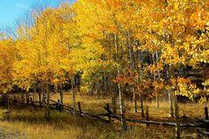 Mount Nebo Loop, Utah autumn color