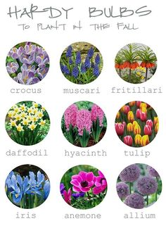 Things to do in your fall garden! Plan ahead for beautiful spring blossoms!
