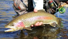 Photos of the Day: Rainbows of Southern Idaho | Orvis News