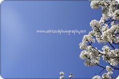 spring lovliness