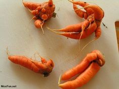 Search: strange looking vegetables Carrots, Creepy, Funny Pictures, Meat, Vegetables, Food, Search, Nature, Research
