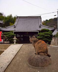 #ねこ #cat #onomichi #hiroshima #japan  #instagood  #japantravel #happy #fun #look #retrip #travel #photography #portrait #photo  #instajapan #instadaily  #ポートレート #日本の風景  #japantrip #natgeo #amazing  #photo_shorttrip #solo #yolo  #wonderful_places #awesome #cool #hello