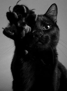 ..black cat and paw